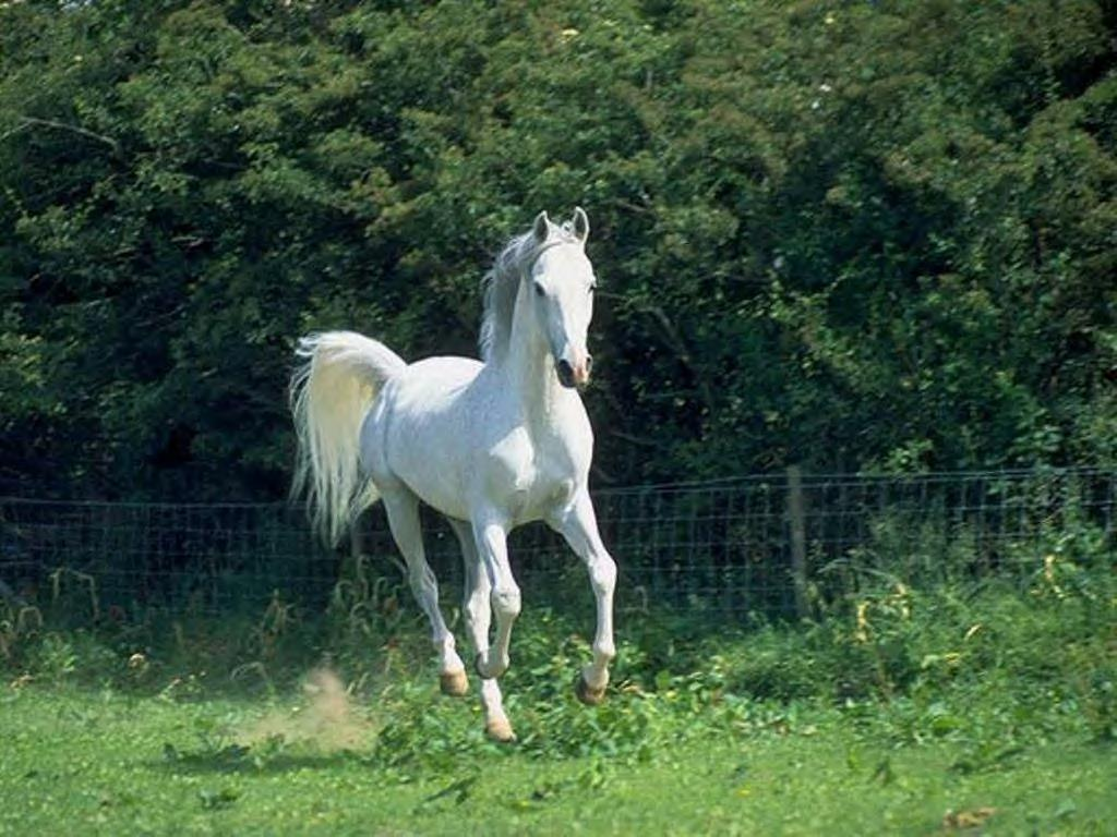 Man riding a beautiful white horse in autumn forest - 54ka ... |Ride The White Horse